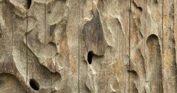 tratamientos madera termitas Barcelona