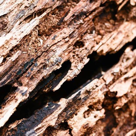 eliminar termitas en Barcelona